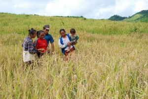 Rice farmers in the northern uplands of Laos