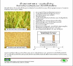 EXample of one of the fact sheets prepared by the Pilot Project from rice reseacrh results-in Lao