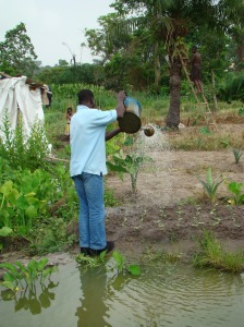 Vegetables being watered with wastewater